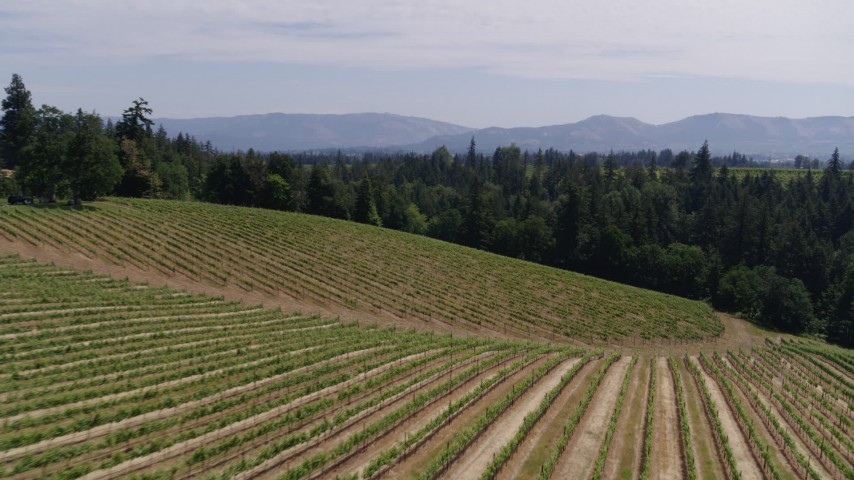 5.7K aerial video fly low over fields of grapevines toward trees, Hood River, Oregon Aerial Stock Footage | DX0001_000409