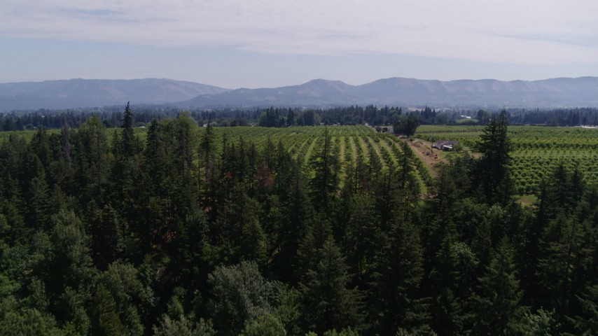 5.7K stock footage aerial video fly over fields trees to reveal orchards, Hood River, Oregon Aerial Stock Footage | DX0001_000410