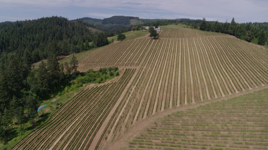 5.7K stock footage aerial video approach and fly over vineyards at Phelps Creek Vineyards, Hood River, Oregon Aerial Stock Footage | DX0001_000411
