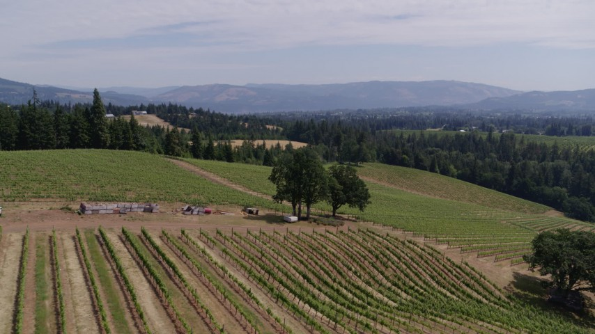 5.7K stock footage aerial video approach and fly over trees and vineyards at Phelps Creek Vineyards, Hood River, Oregon Aerial Stock Footage | DX0001_000412