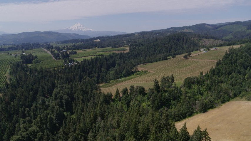 5.7K stock footage aerial video of Phelps Creek Vineyards with Mount Hood in the background, Hood River, Oregon Aerial Stock Footage | DX0001_000415