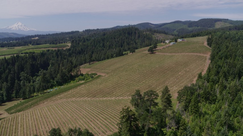 5.7K stock footage aerial video of Phelps Creek Vineyards and fly over the grapevines, Hood River, Oregon Aerial Stock Footage | DX0001_000416