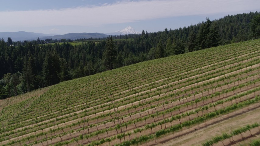 5.7K stock footage aerial video of flying over grapevines at Phelps Creek Vineyards with a view of Mount Hood, Hood River, Oregon Aerial Stock Footage | DX0001_000417