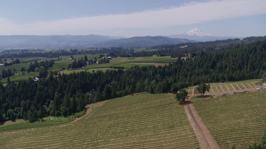 5.7K aerial video of a reverse view of grapevines at Phelps Creek Vineyards with a view of Mount Hood, Hood River, Oregon Aerial Stock Footage | DX0001_000418