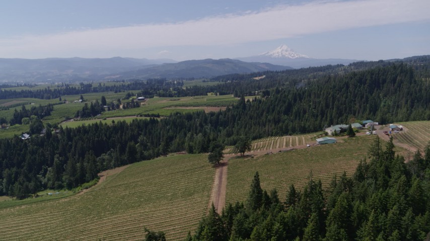 5.7K stock footage aerial video of flying over grapevines at Phelps Creek Vineyards with a view of Mount Hood, Hood River, Oregon Aerial Stock Footage | DX0001_000419