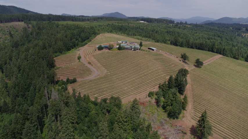 5.7K aerial video of flying over grapevines at Phelps Creek Vineyards toward the buildings on the hilltop, Hood River, Oregon Aerial Stock Footage | DX0001_000421