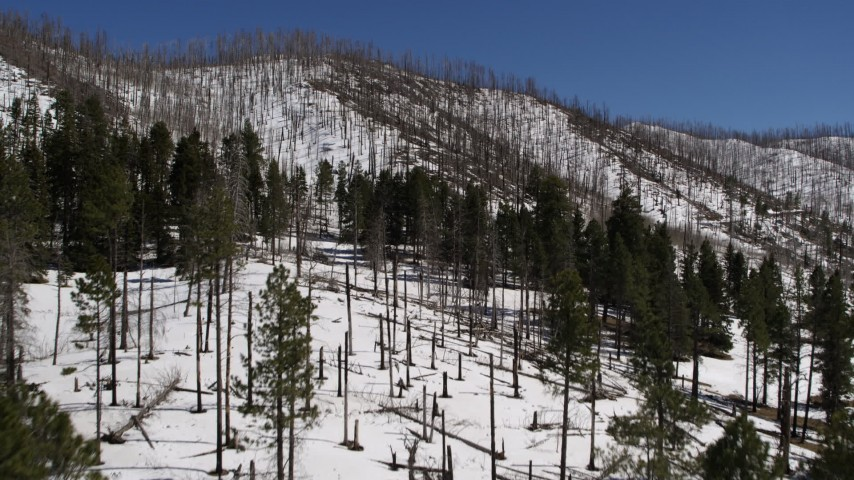 5.7K stock footage aerial video fly low over snowy slopes past dead trees and evergreens, New Mexico Aerial Stock Footage | DX0002_134_014