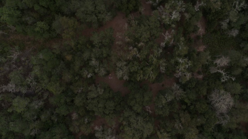 5.7K stock footage aerial video of a bird's eye view of forest trees in Orlando, Florida Aerial Stock Footage | DX0003_234_032