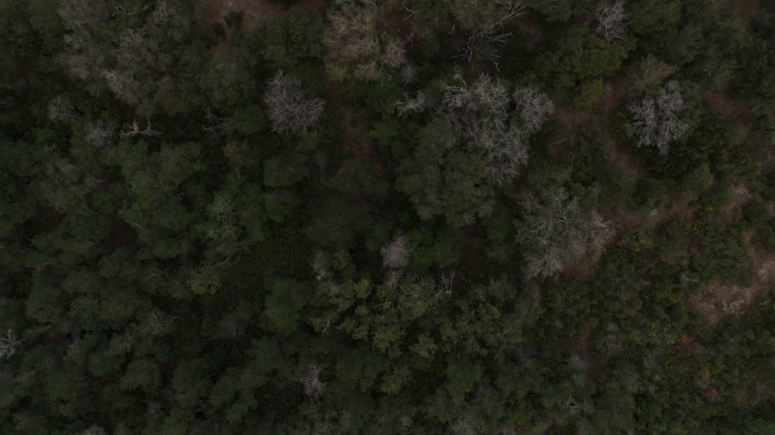 5.7K stock footage aerial video of a bird's eye view of forest trees while ascending in Orlando, Florida Aerial Stock Footage | DX0003_234_033