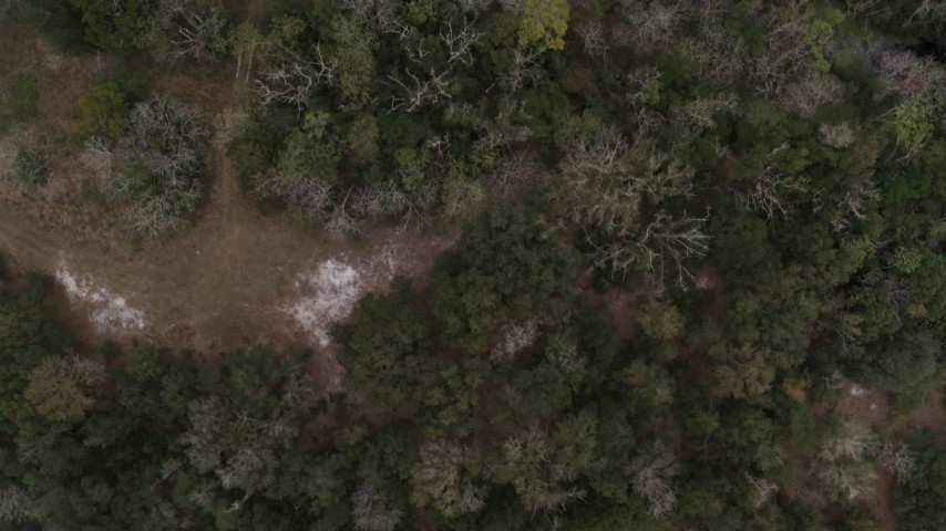 5.7K stock footage aerial video of a bird's eye view of forest trees and clearings in Orlando, Florida Aerial Stock Footage | DX0003_234_034