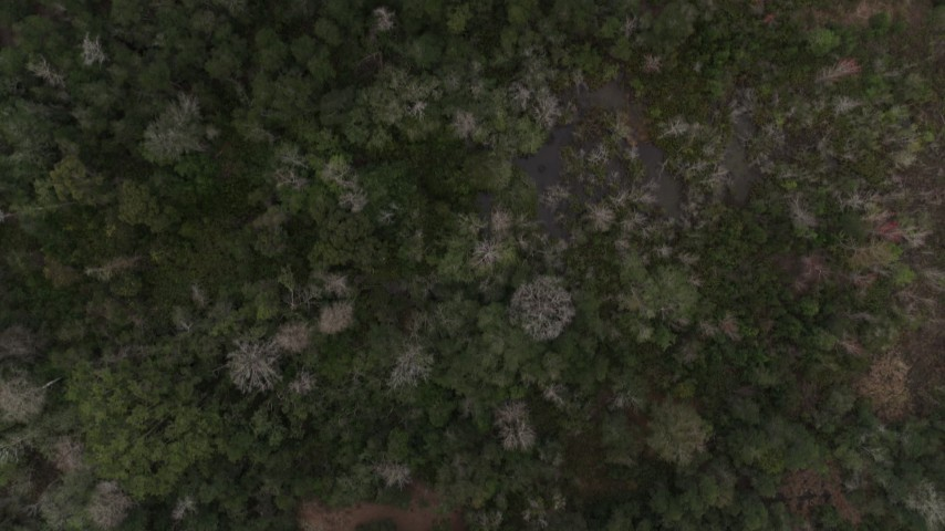 5.7K stock footage aerial video of a bird's eye view of trees in a forest, Orlando, Florida Aerial Stock Footage | DX0003_234_037