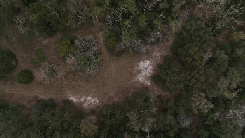 5.7K stock footage aerial video of a bird's eye view descending toward forest clearing, Orlando, Florida Aerial Stock Footage | DX0003_234_038