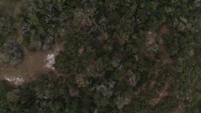 5.7K stock footage aerial video overhead view of a forest clearing and trees, reveal river, Orlando, Florida Aerial Stock Footage | DX0003_234_040