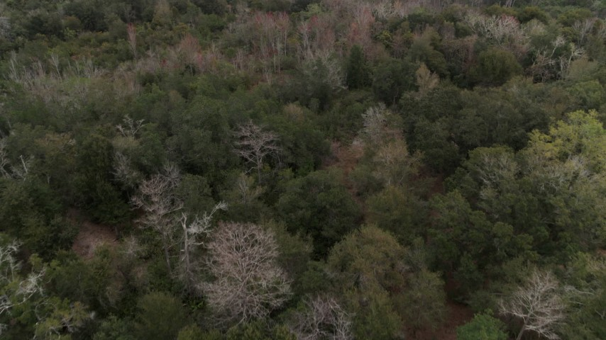 5.7K stock footage aerial video fly low over forest trees, Orlando, Florida Aerial Stock Footage | DX0003_234_050