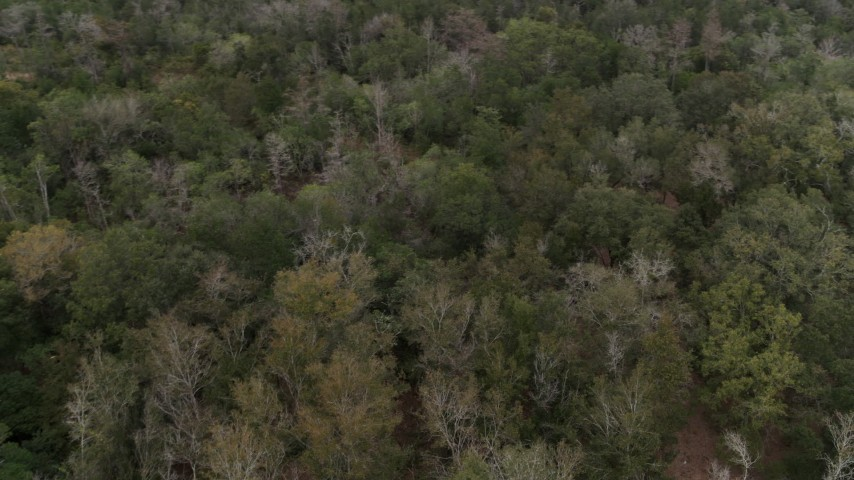 5.7K stock footage aerial video of panning over forest trees, Orlando, Florida Aerial Stock Footage | DX0003_234_052
