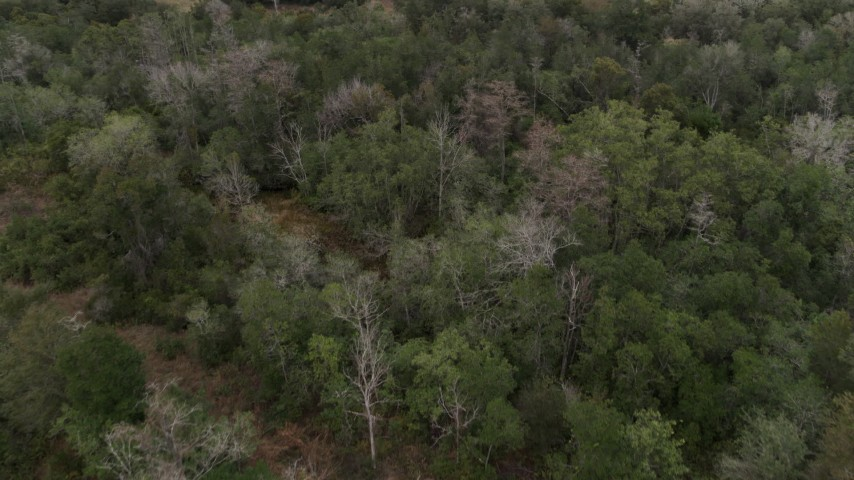 5.7K stock footage aerial video of flying over forest trees, Orlando, Florida Aerial Stock Footage | DX0003_234_053