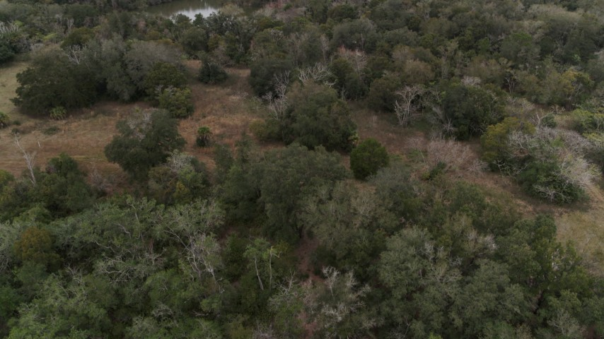 5.7K stock footage aerial video of ascending over forest trees, Orlando, Florida Aerial Stock Footage | DX0003_234_054