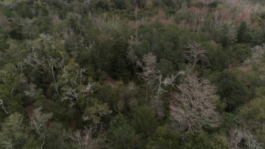 5.7K stock footage aerial video slowly flying over treetops in the forest, Orlando, Florida Aerial Stock Footage | DX0003_234_060