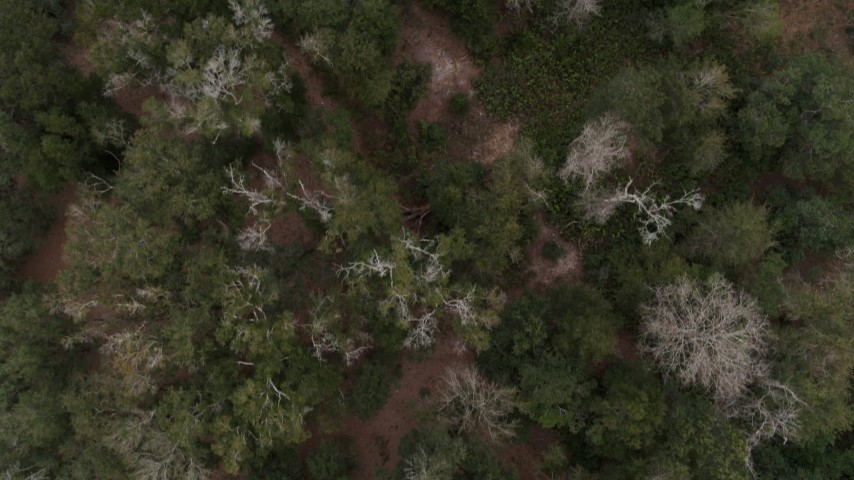 5.7K stock footage aerial video looking down on trees while flying over forest, Orlando, Florida Aerial Stock Footage   DX0003_234_062