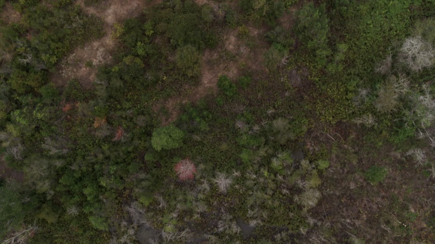5.7K stock footage aerial video looking down at trees and clearings while flying over forest, Orlando, Florida Aerial Stock Footage | DX0003_234_063