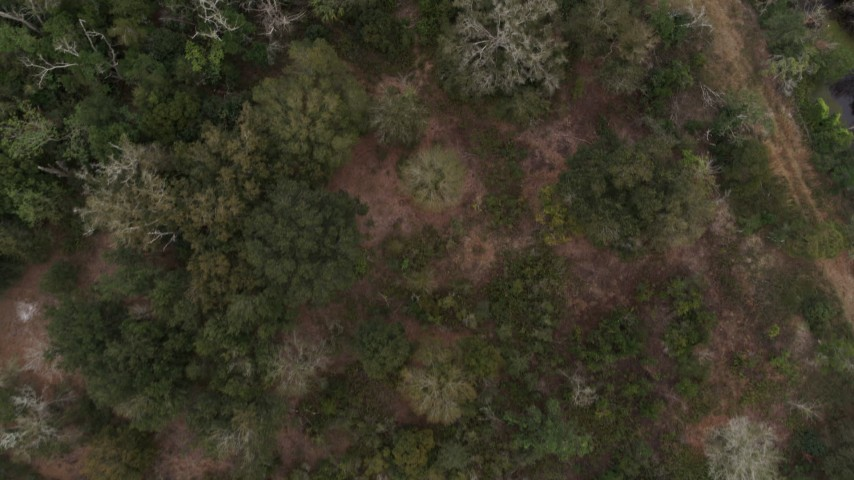 5.7K stock footage aerial video ascend away from trees and clearings in a forest, Orlando, Florida Aerial Stock Footage | DX0003_234_064