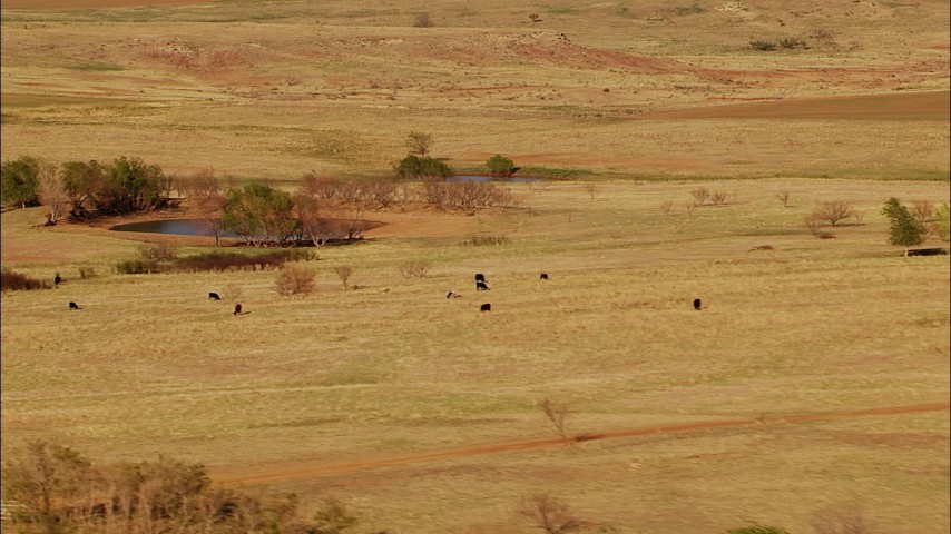 1080 stock footage aerial video of cows grazing near a pond in Oklahoma Aerial Stock Footage | HDA12_116