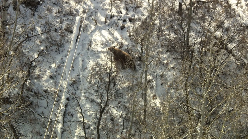 HD stock footage aerial video of a bear running through the woods in Rocky Mountains, Colorado Aerial Stock Footage | HDA13_385