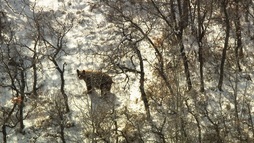 HD stock footage aerial video of a bear answering an age-old question in the Rocky Mountains, Colorado Aerial Stock Footage | HDA13_385_01