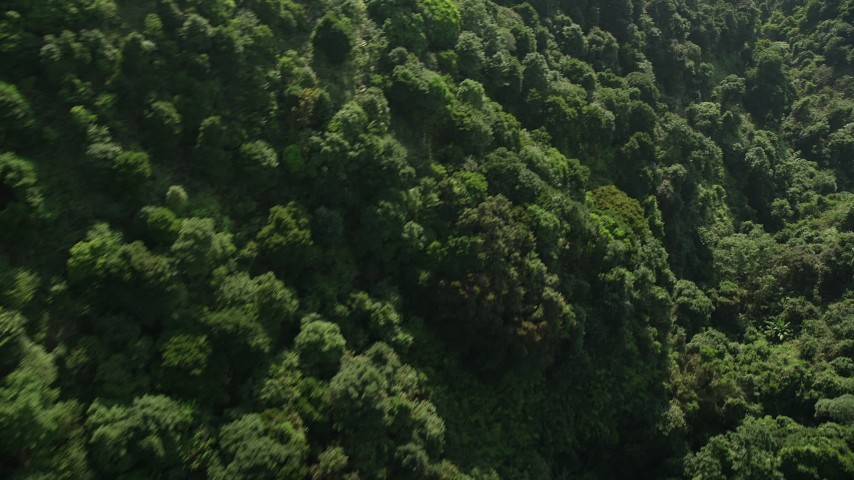 5K stock footage video fly over dense forest on Hong Kong Island, China Aerial Stock Footage | SS01_0106