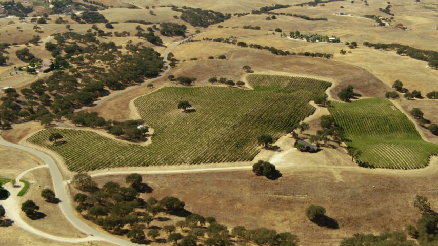 1080 stock footage aerial video of flying over a vineyard in Paso Robles, California Aerial Stock Footage | TS01_077