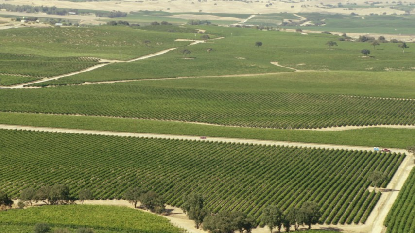 1080 stock footage aerial video of car on country road through vineyards in Paso Robles, California Aerial Stock Footage | TS01_084