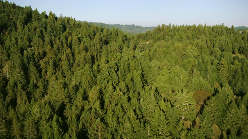 1080 stock footage aerial video of flying over mountains and evergreen forest in Sonoma County, California Aerial Stock Footage | TS01_211
