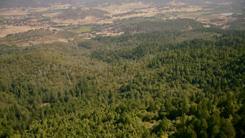 1080 stock footage aerial video of tilting from forest to approach vineyards in Pope Valley, California Aerial Stock Footage | TS01_244