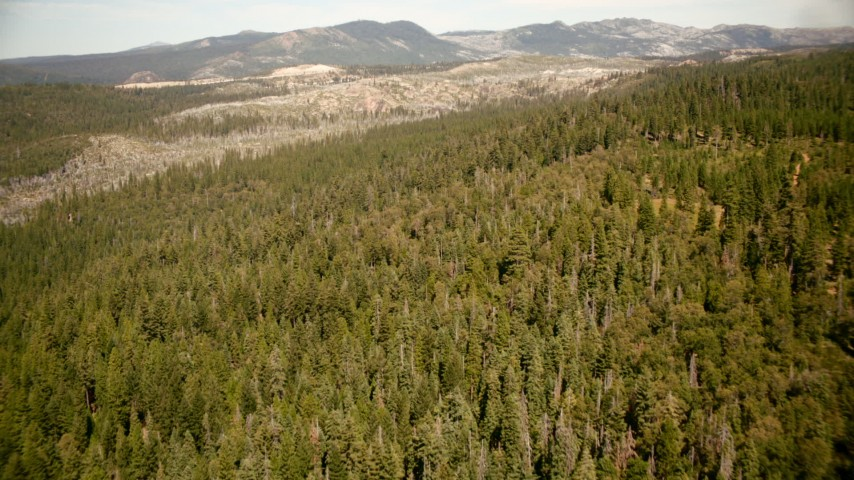 1080 stock footage aerial video of flying over evergreen forest in the Sierra Nevada Mountains, California Aerial Stock Footage | TS01_290