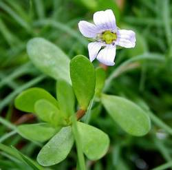 Aendri's Raw Herb