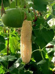 Dhamargava's Raw Herb