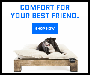 Toby & Molly Pet Bed & Frame - Shop Now