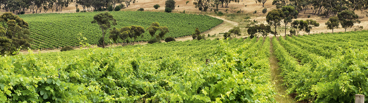 The Lodge Hill Vineyard, Clare Valley