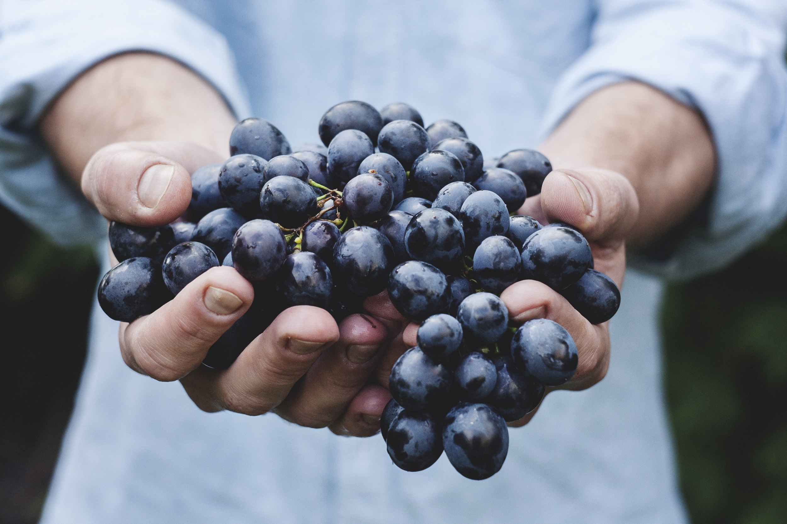 holding-grapes