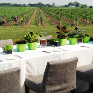 Many place settings and flowers adorn a long table set-up overlooking the vineyard