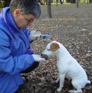 chien truffier- truffle dog