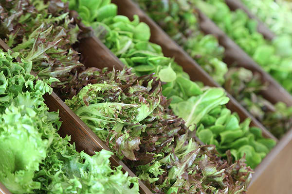 Foods-That-May-Improve-Your-Memory-Greens