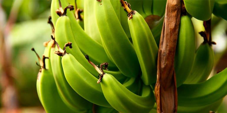 What Is Banana Flour?