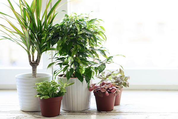 Can Indoor Plants Really Clean the Air in Your House? | BeachbodyBlog.com