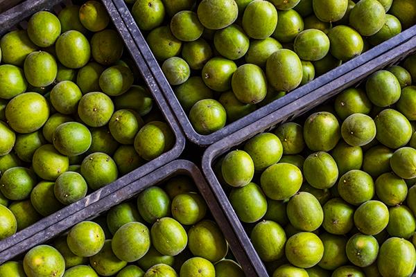 monk fruit, stevia, Luo han guo, Shakeology