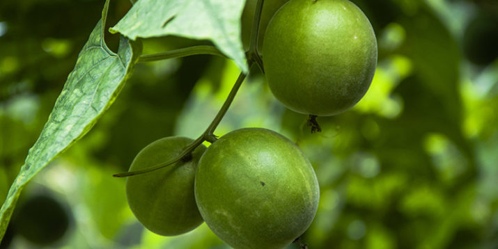 6 Things to Know About Monk Fruit