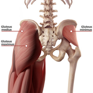 Gluteal muscles – butt workouts at home