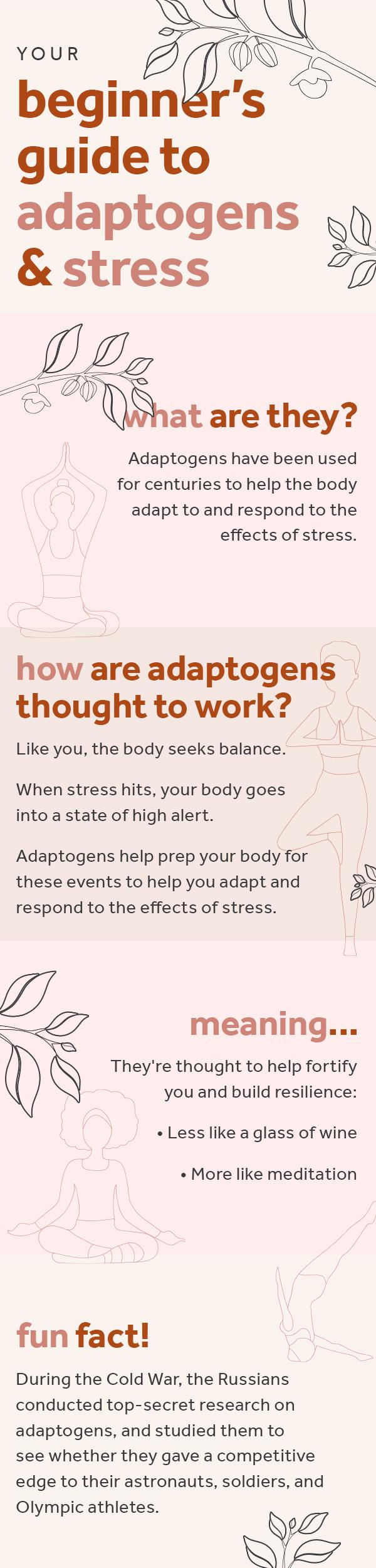 Beginner's Guide to Adaptogens