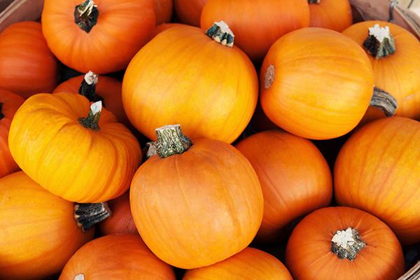 Sugar pumpkins at the market