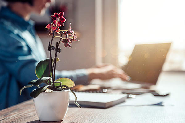 Orchid sitting on desk in home office